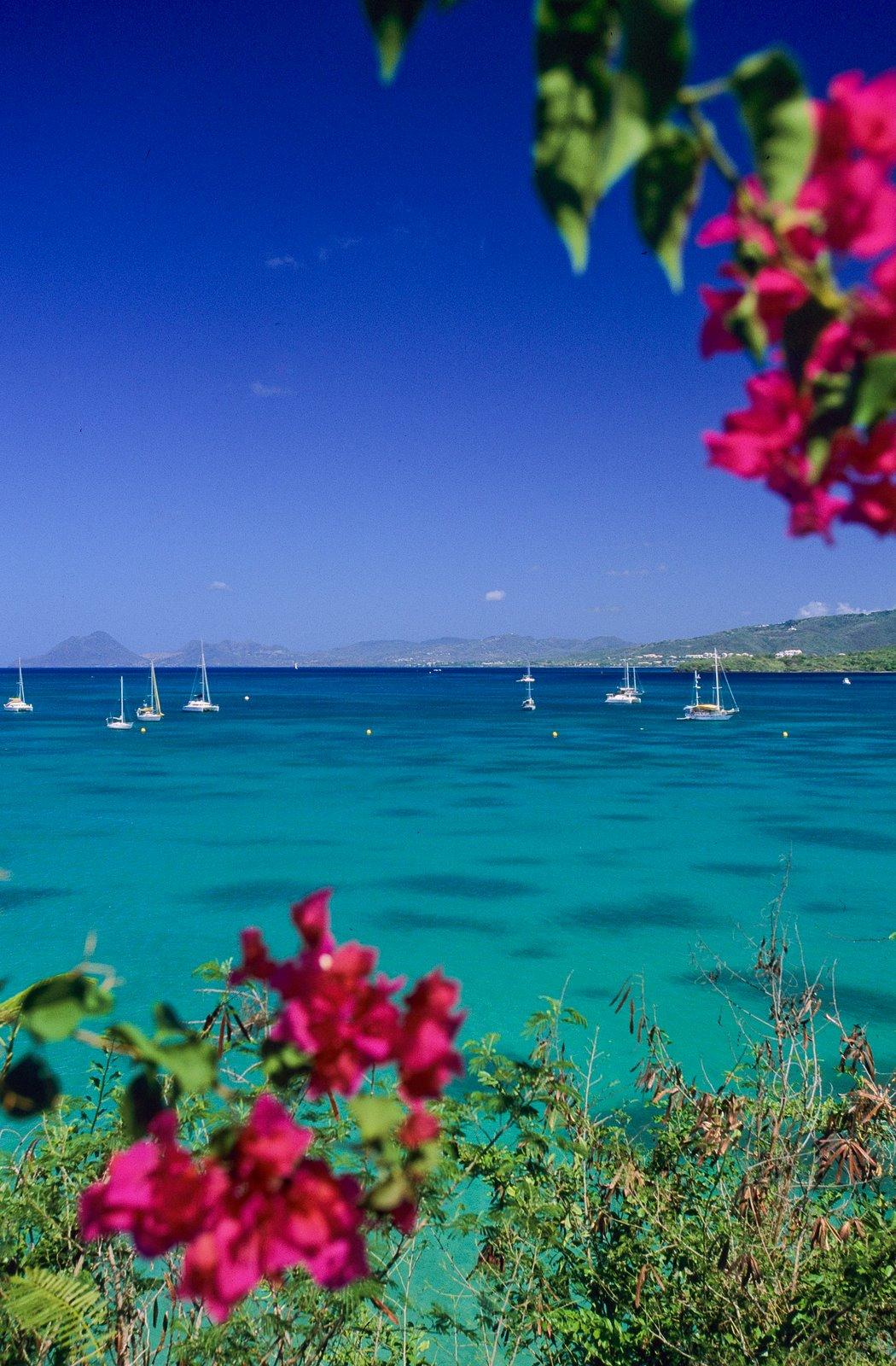 Top 3 des meilleurs lieux de mouillages à La Martinique